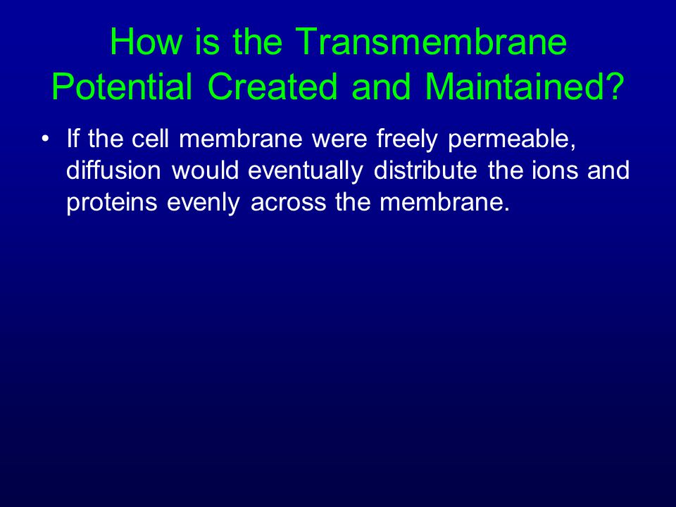 How is the Transmembrane Potential Created and Maintained? If the cell membrane were freely permeable, diffusion would eventually distribute the ions