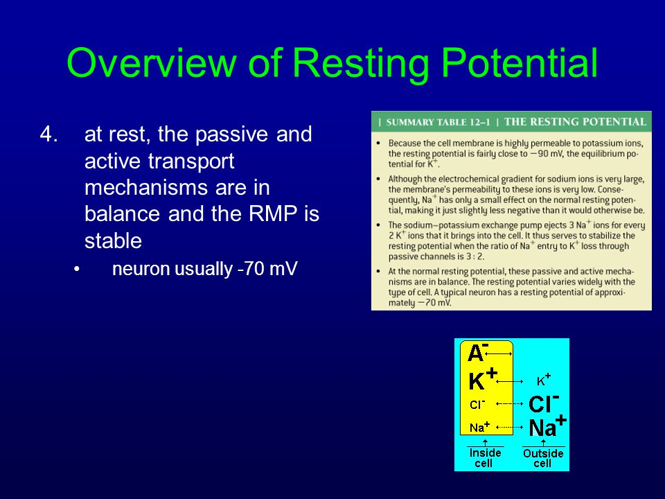 Overview of Resting Potential 4.at rest, the passive and active transport mechanisms are in balance and the RMP is stable neuron usually -70 mV