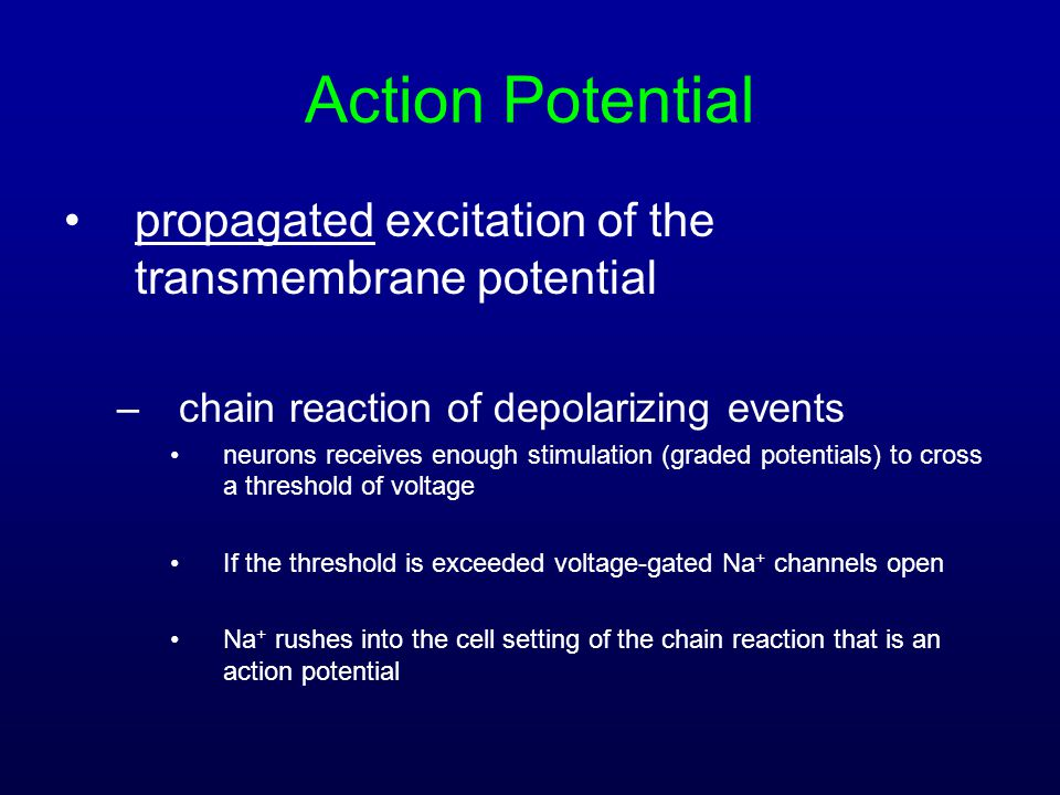 Action Potential propagated excitation of the transmembrane potential –chain reaction of depolarizing events neurons receives enough stimulation (grad