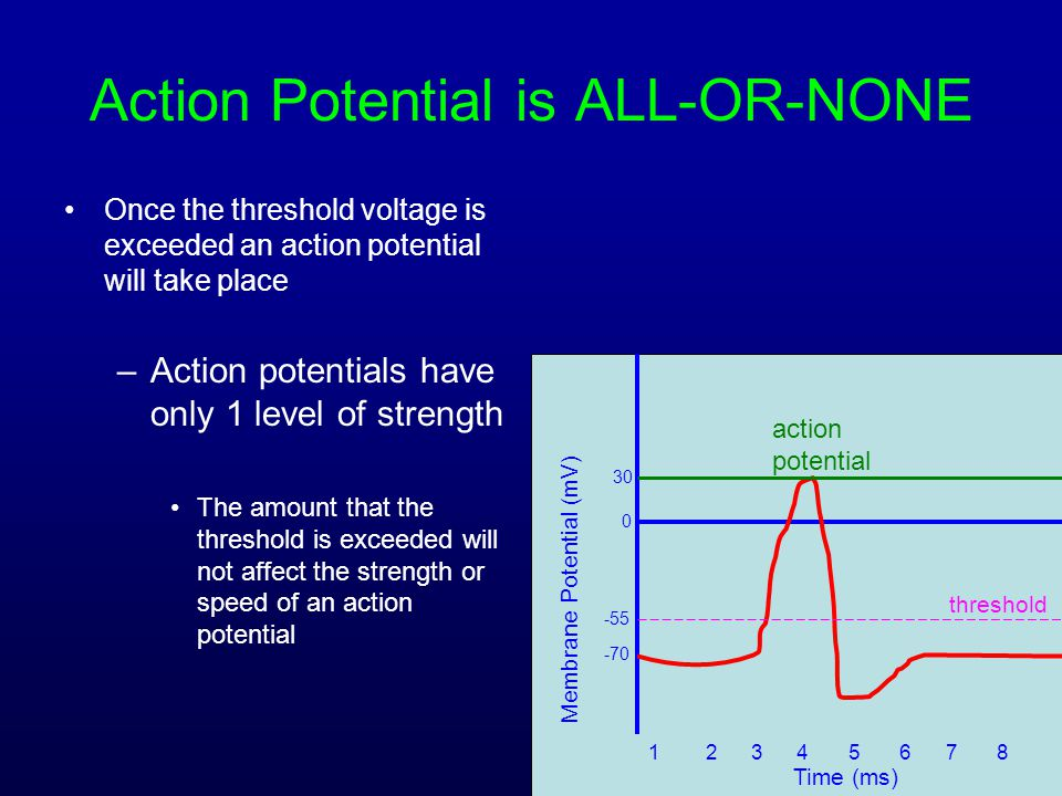 Action Potential is ALL-OR-NONE Once the threshold voltage is exceeded an action potential will take place –Action potentials have only 1 level of str