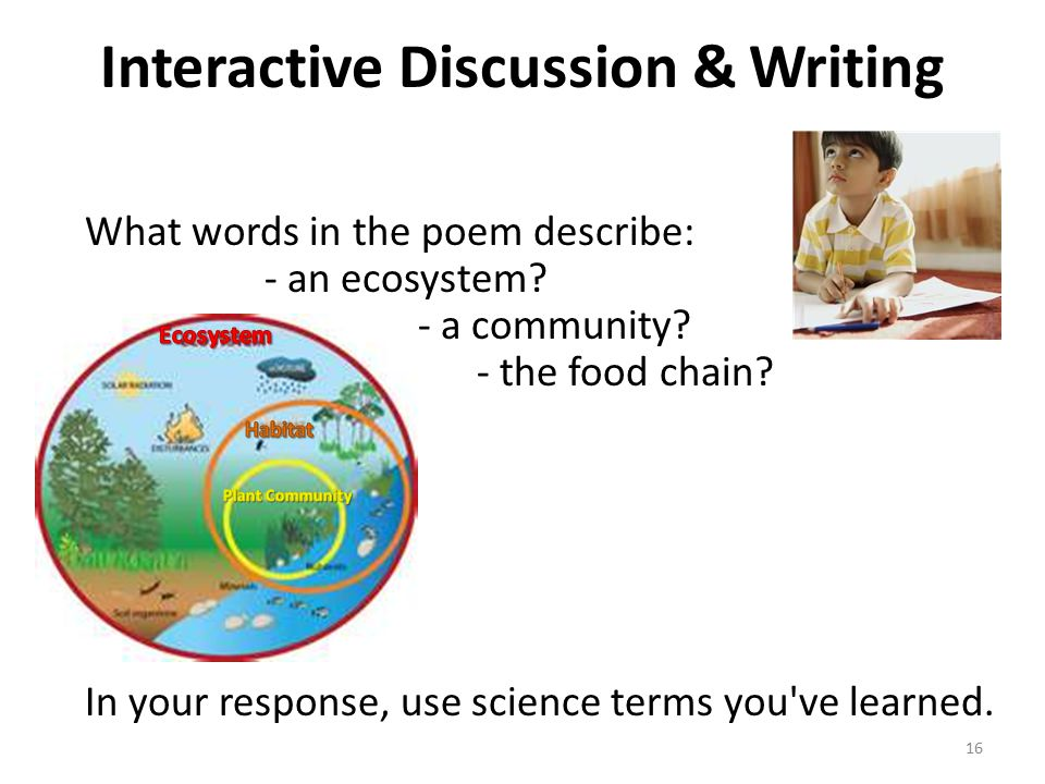 Interactive Discussion & Writing What words in the poem describe: - an ecosystem.