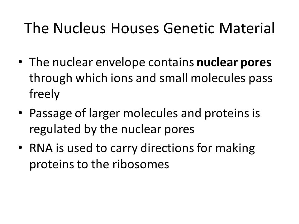 The Nucleus Houses Genetic Material The nuclear envelope contains nuclear pores through which ions and small molecules pass freely Passage of larger m