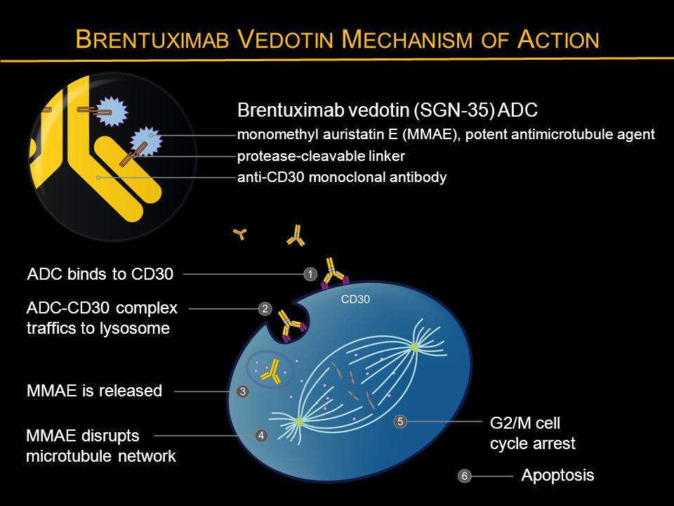 B RENTUXIMAB V EDOTIN M ECHANISM OF A CTION Brentuximab vedotin (SGN-35) ADC monomethyl auristatin E (MMAE), potent antimicrotubule agent protease-cle