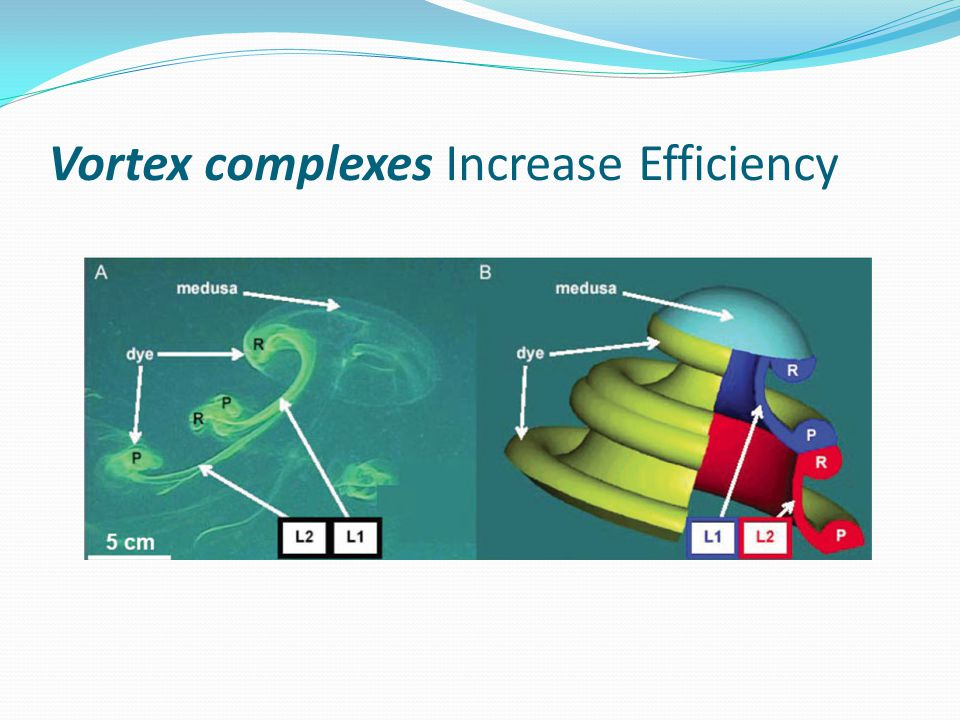 Vortex complexes Increase Efficiency