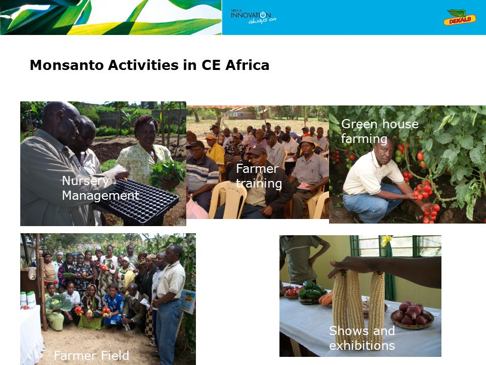 Monsanto Activities in CE Africa Nursery Management Farmer training Green house farming Farmer Field days Shows and exhibitions