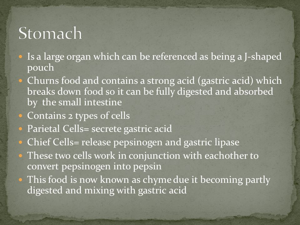 Is a large organ which can be referenced as being a J-shaped pouch Churns food and contains a strong acid (gastric acid) which breaks down food so it can be fully digested and absorbed by the small intestine Contains 2 types of cells Parietal Cells= secrete gastric acid Chief Cells= release pepsinogen and gastric lipase These two cells work in conjunction with eachother to convert pepsinogen into pepsin This food is now known as chyme due it becoming partly digested and mixing with gastric acid