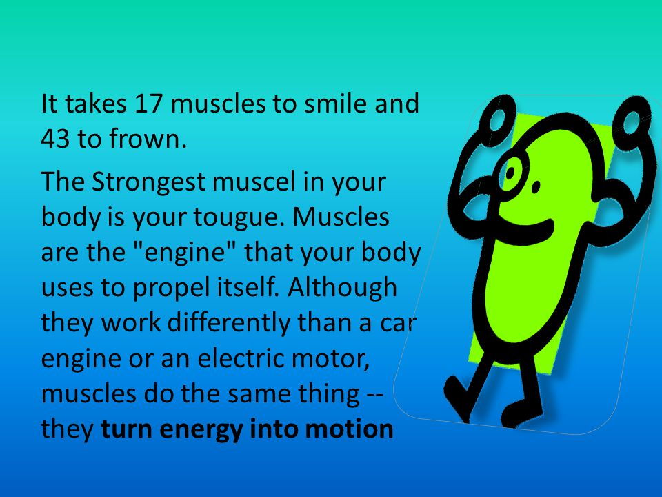 It takes 17 muscles to smile and 43 to frown. The Strongest muscel in your body is your tougue. Muscles are the