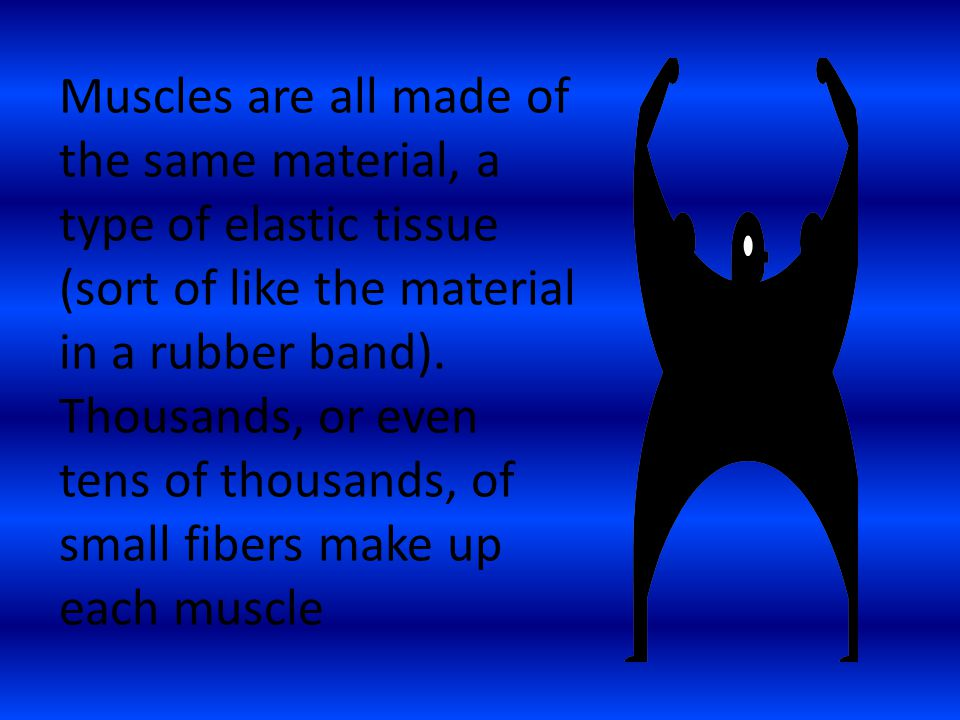 Muscles are all made of the same material, a type of elastic tissue (sort of like the material in a rubber band). Thousands, or even tens of thousands