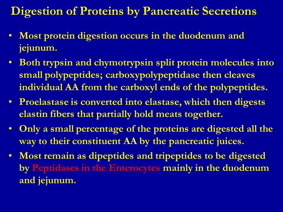 Digestion of Proteins by Pancreatic Secretions Most protein digestion occurs in the duodenum and jejunum. Both trypsin and chymotrypsin split protein
