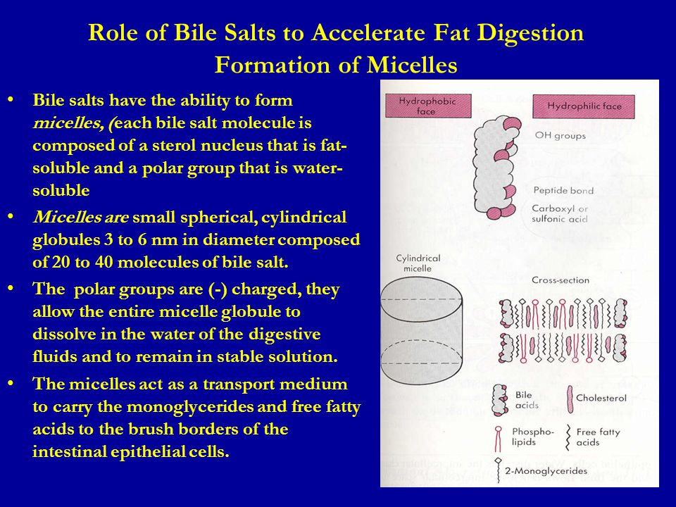 Role of Bile Salts to Accelerate Fat Digestion Formation of Micelles Bile salts have the ability to form micelles, (each bile salt molecule is compose