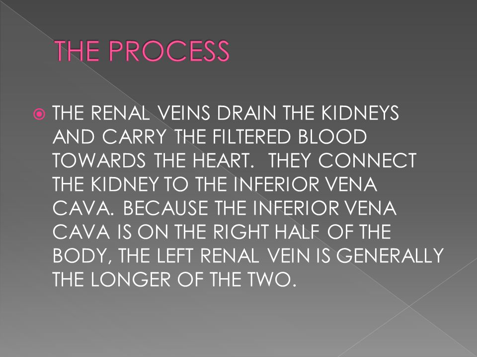  THE RENAL VEINS DRAIN THE KIDNEYS AND CARRY THE FILTERED BLOOD TOWARDS THE HEART.