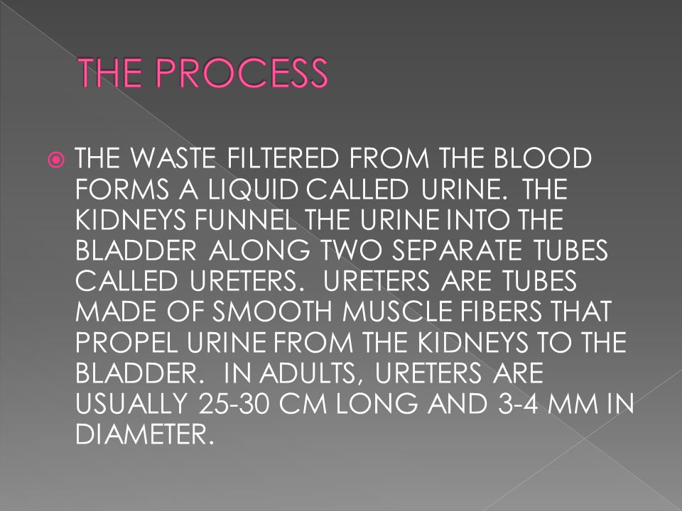  THE WASTE FILTERED FROM THE BLOOD FORMS A LIQUID CALLED URINE. THE KIDNEYS FUNNEL THE URINE INTO THE BLADDER ALONG TWO SEPARATE TUBES CALLED URETERS