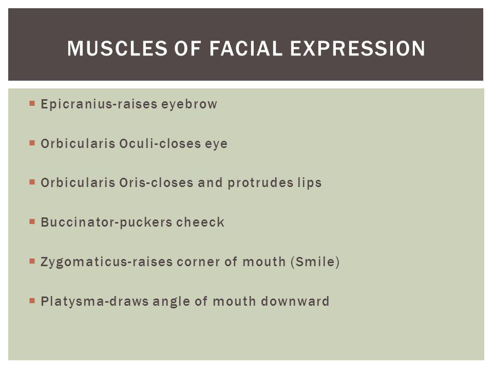  Epicranius-raises eyebrow  Orbicularis Oculi-closes eye  Orbicularis Oris-closes and protrudes lips  Buccinator-puckers cheeck  Zygomaticus-rais