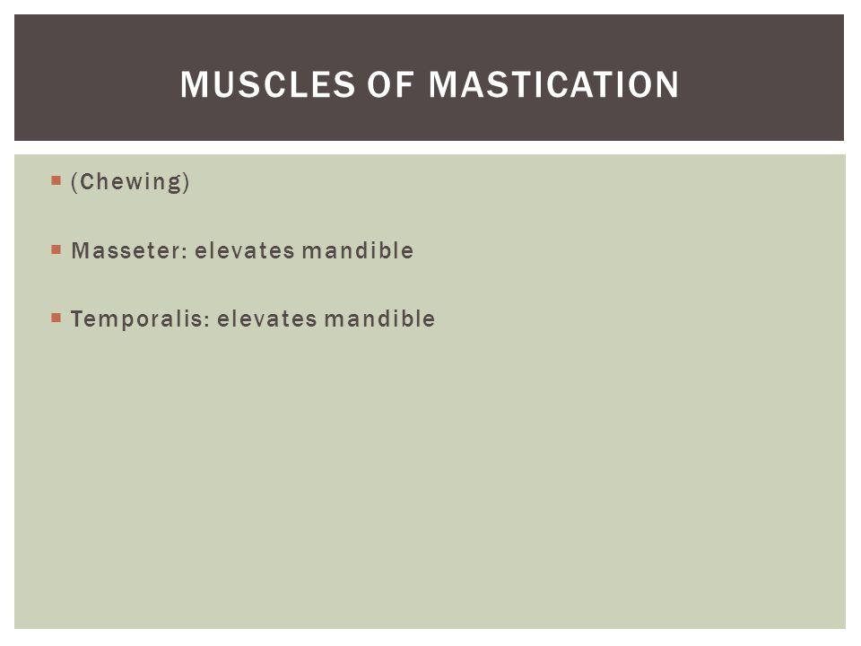  (Chewing)  Masseter: elevates mandible  Temporalis: elevates mandible MUSCLES OF MASTICATION
