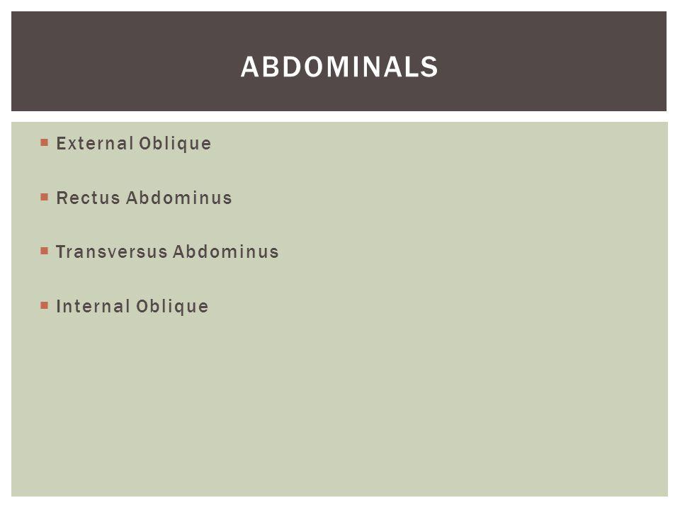  External Oblique  Rectus Abdominus  Transversus Abdominus  Internal Oblique ABDOMINALS