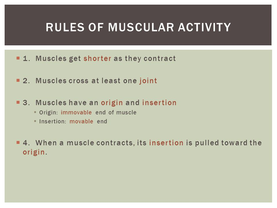  1. Muscles get shorter as they contract  2. Muscles cross at least one joint  3. Muscles have an origin and insertion  Origin: immovable end of m