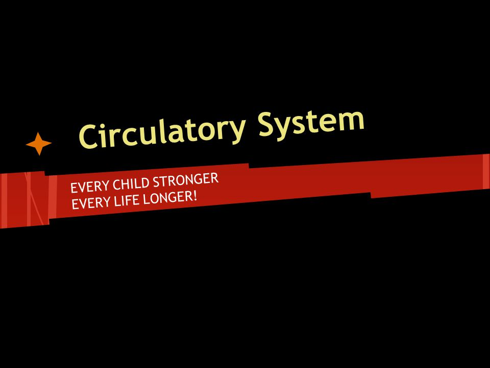 Circulatory System EVERY CHILD STRONGER EVERY LIFE LONGER!