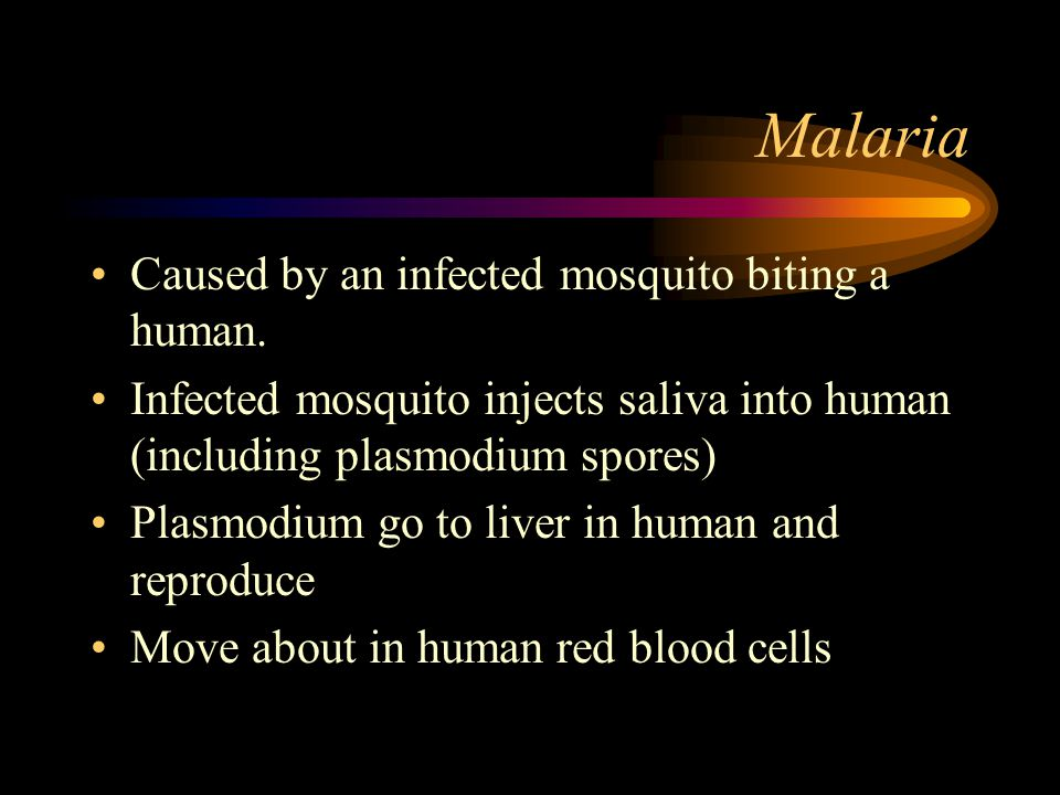 Malaria Caused by an infected mosquito biting a human. Infected mosquito injects saliva into human (including plasmodium spores) Plasmodium go to live