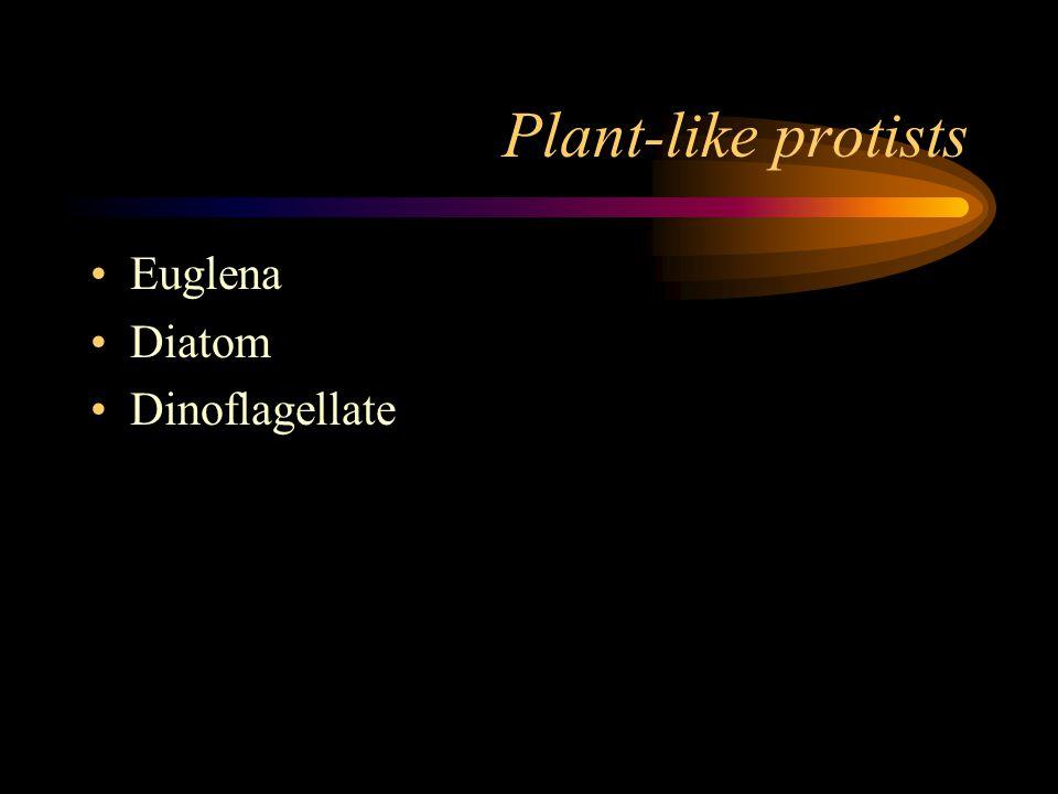 Plant-like protists Euglena Diatom Dinoflagellate