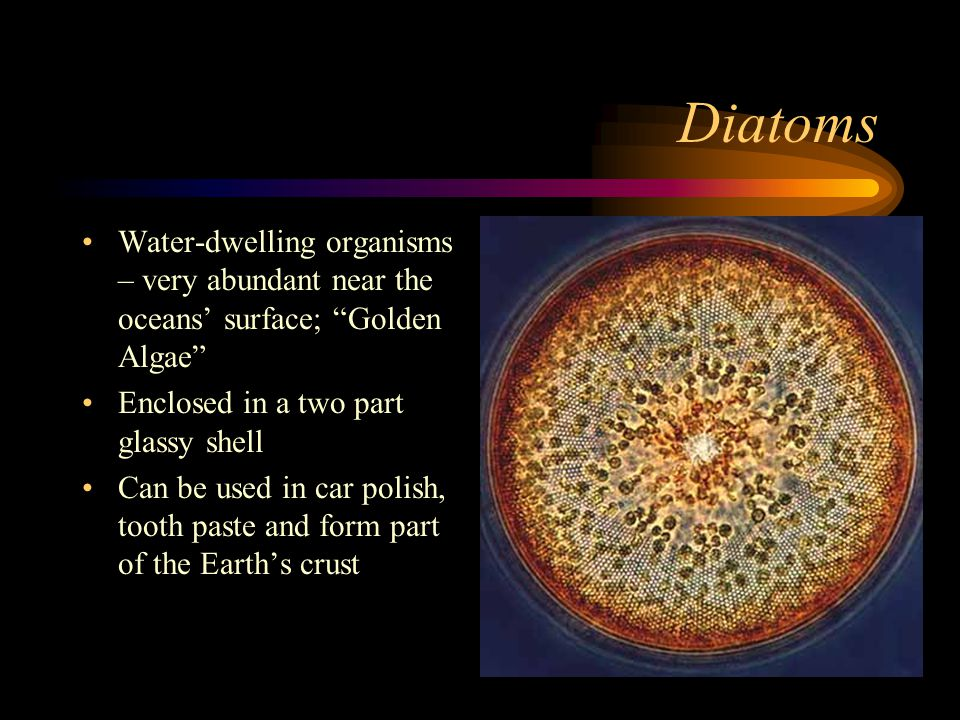 "Diatoms Water-dwelling organisms – very abundant near the oceans' surface; ""Golden Algae"" Enclosed in a two part glassy shell Can be used in car polis"