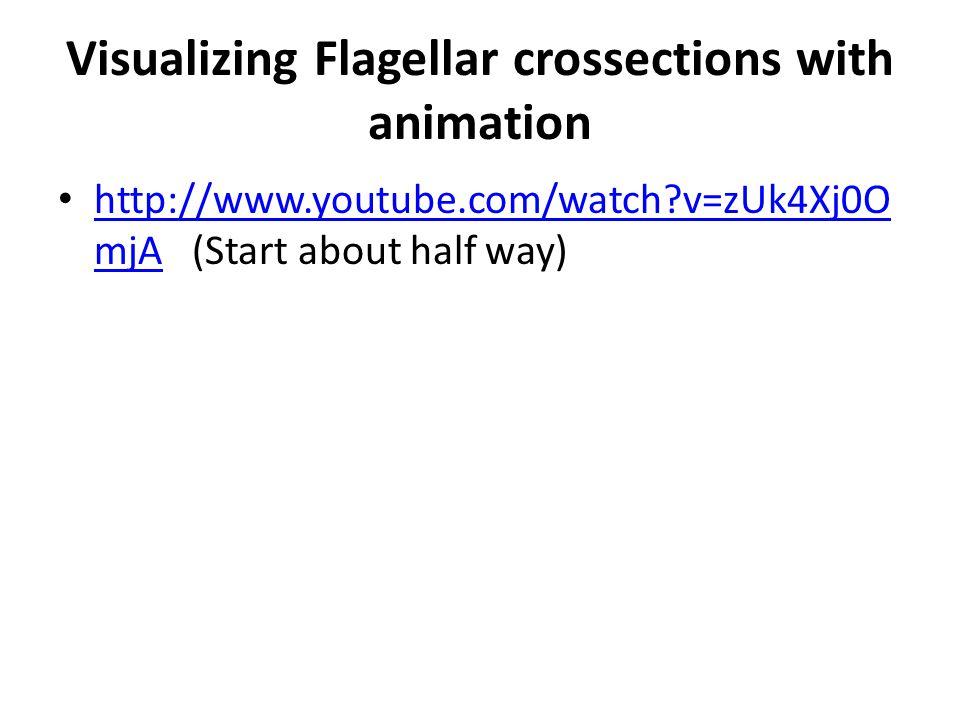 Visualizing Flagellar crossections with animation http://www.youtube.com/watch v=zUk4Xj0O mjA (Start about half way) http://www.youtube.com/watch v=zUk4Xj0O mjA