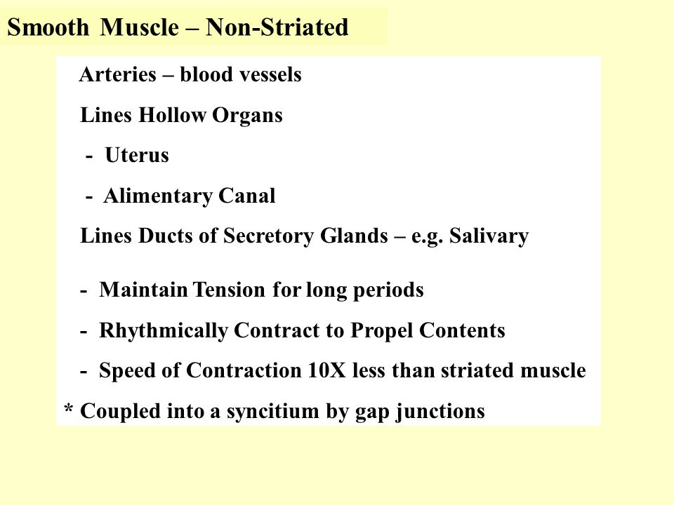 Smooth Muscle – Non-Striated Arteries – blood vessels Lines Hollow Organs - Uterus - Alimentary Canal Lines Ducts of Secretory Glands – e.g.