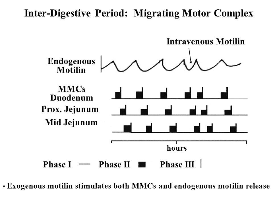 Endogenous Motilin MMCs Duodenum Prox.