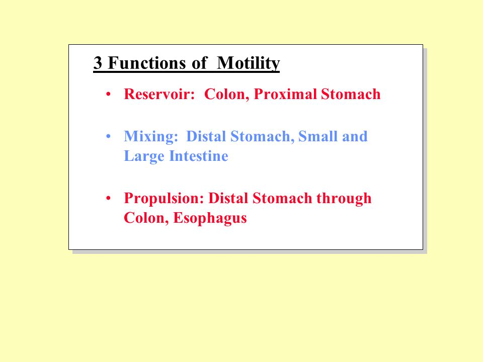 Reservoir: Colon, Proximal Stomach Mixing: Distal Stomach, Small and Large Intestine Propulsion: Distal Stomach through Colon, Esophagus 3 Functions of Motility