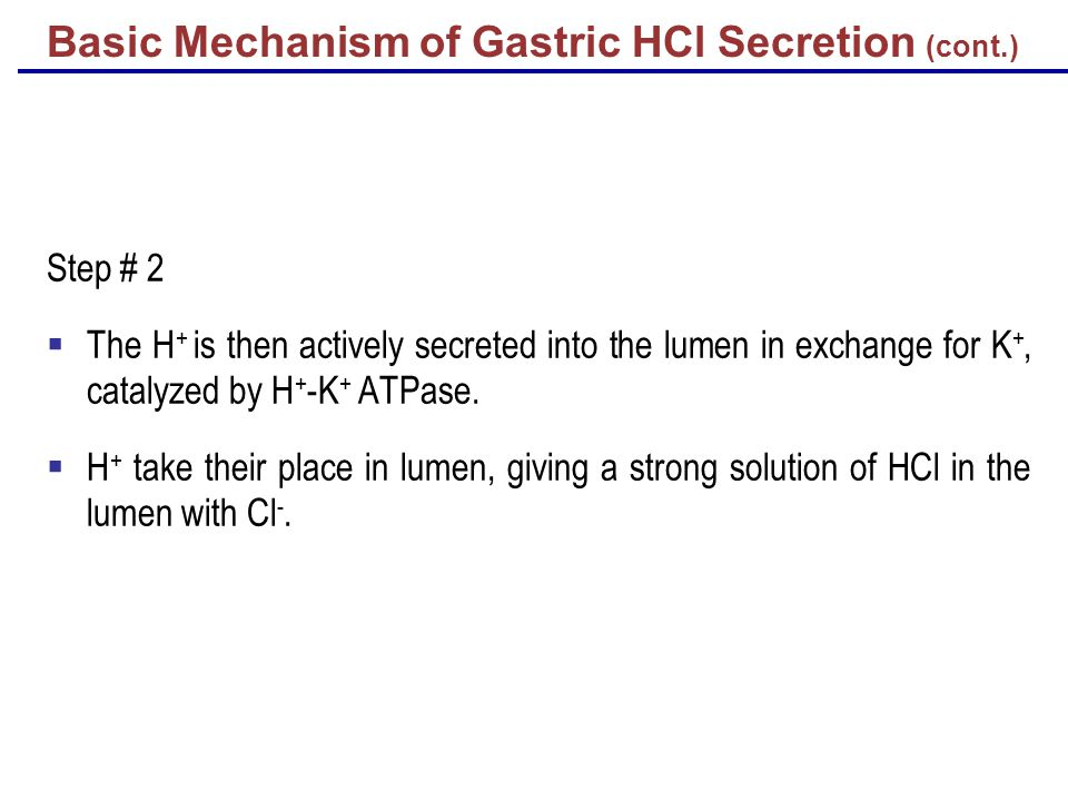 Basic Mechanism of Gastric HCl Secretion (cont.) Step # 2  The H + is then actively secreted into the lumen in exchange for K +, catalyzed by H + -K + ATPase.
