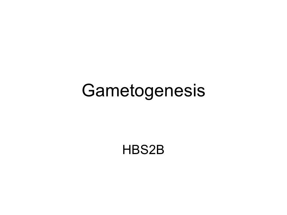 Gametogenesis HBS2B