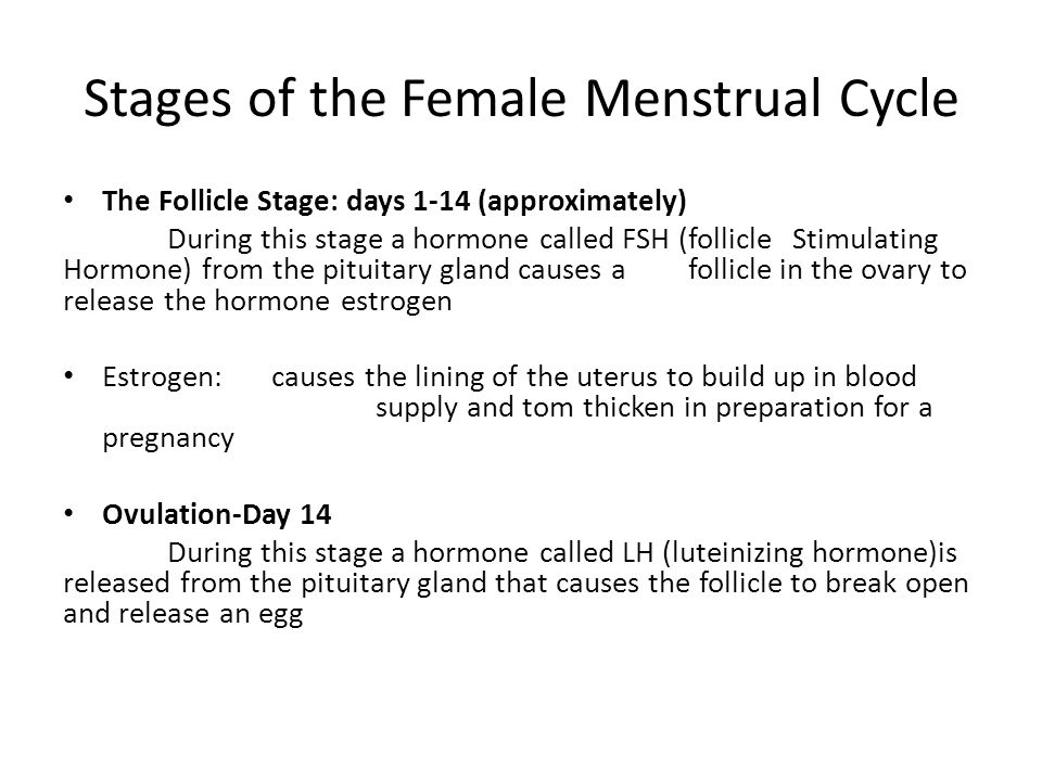 Stages of the Female Menstrual Cycle The Follicle Stage: days 1-14 (approximately) During this stage a hormone called FSH (follicle Stimulating Hormone) from the pituitary gland causes a follicle in the ovary to release the hormone estrogen Estrogen:causes the lining of the uterus to build up in blood supply and tom thicken in preparation for a pregnancy Ovulation-Day 14 During this stage a hormone called LH (luteinizing hormone)is released from the pituitary gland that causes the follicle to break open and release an egg