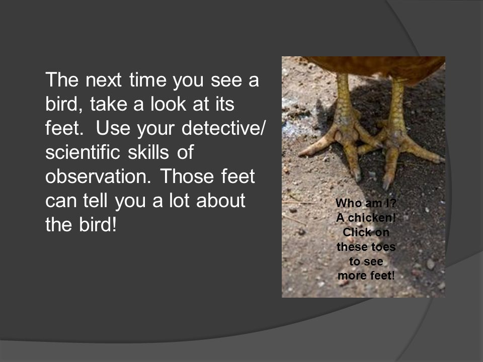 The next time you see a bird, take a look at its feet. Use your detective/ scientific skills of observation. Those feet can tell you a lot about the b