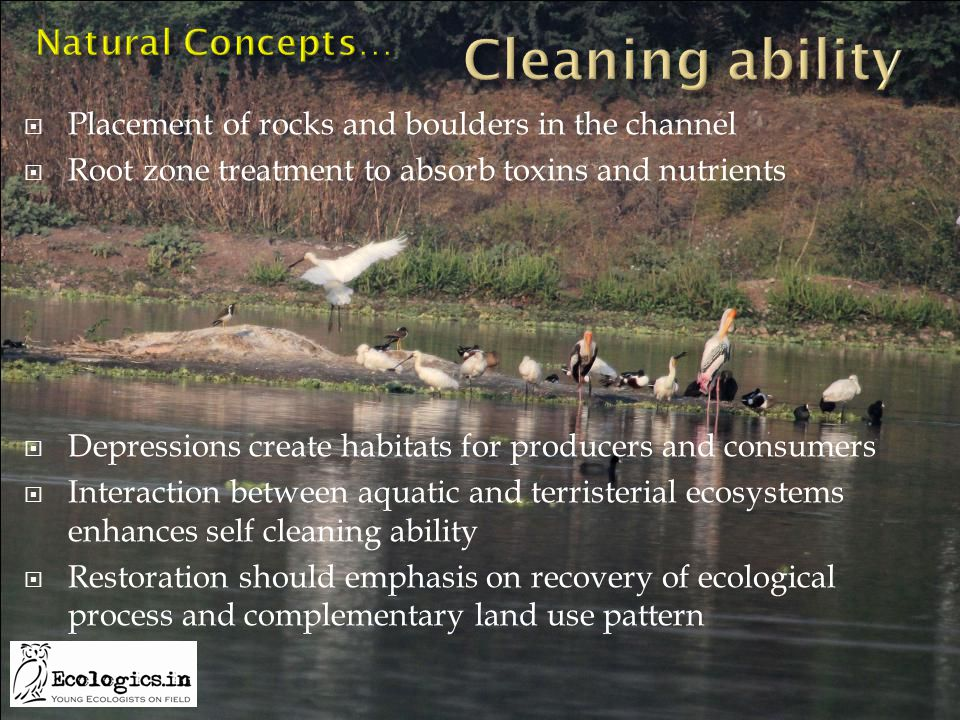  Placement of rocks and boulders in the channel  Root zone treatment to absorb toxins and nutrients  Depressions create habitats for producers and consumers  Interaction between aquatic and terristerial ecosystems enhances self cleaning ability  Restoration should emphasis on recovery of ecological process and complementary land use pattern