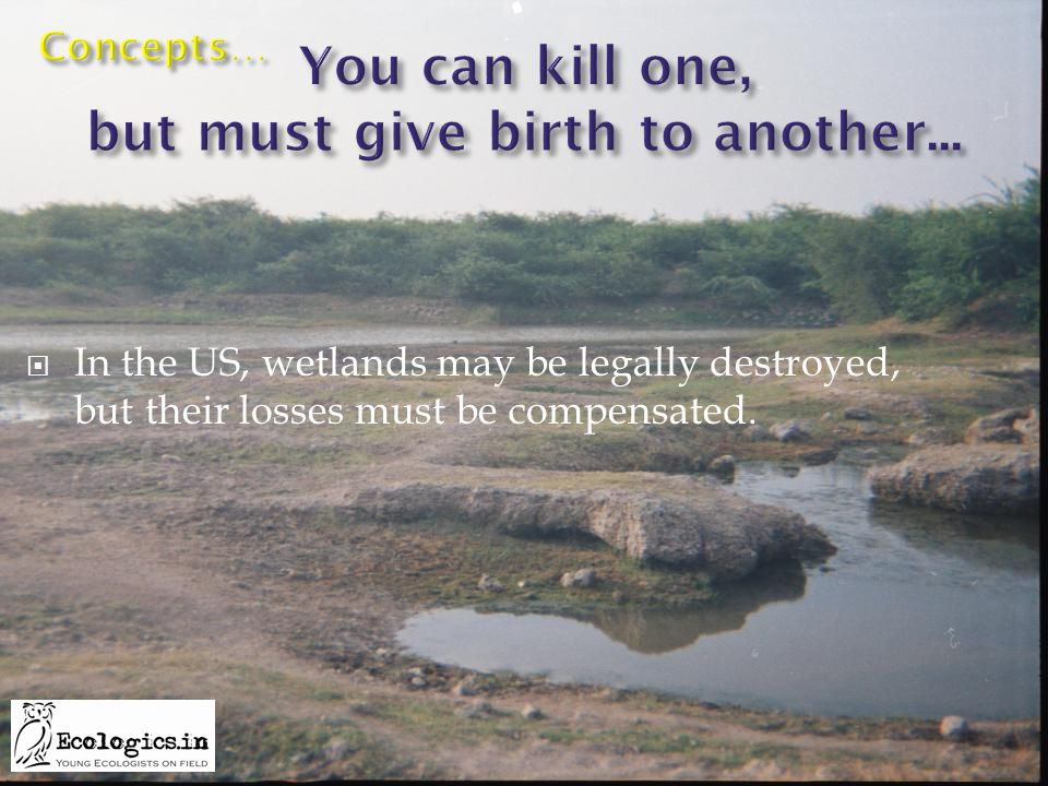  In the US, wetlands may be legally destroyed, but their losses must be compensated.