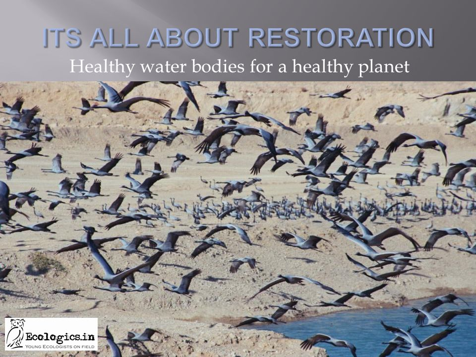 Healthy water bodies for a healthy planet