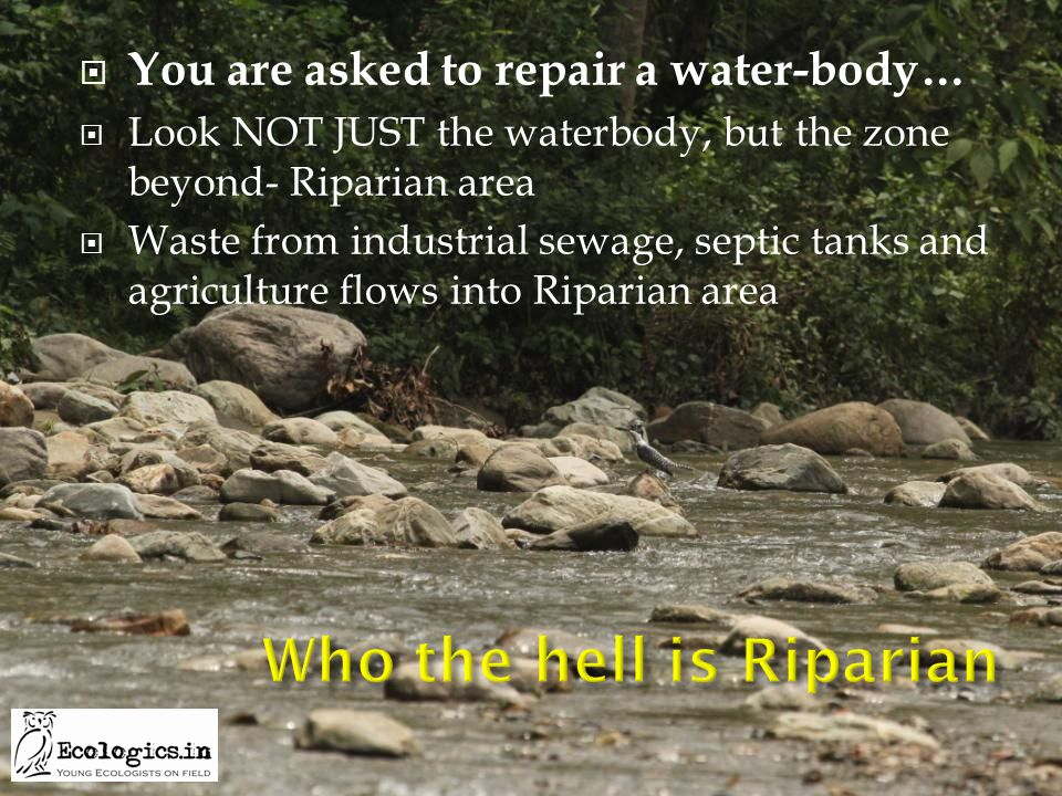  You are asked to repair a water-body…  Look NOT JUST the waterbody, but the zone beyond- Riparian area  Waste from industrial sewage, septic tanks and agriculture flows into Riparian area