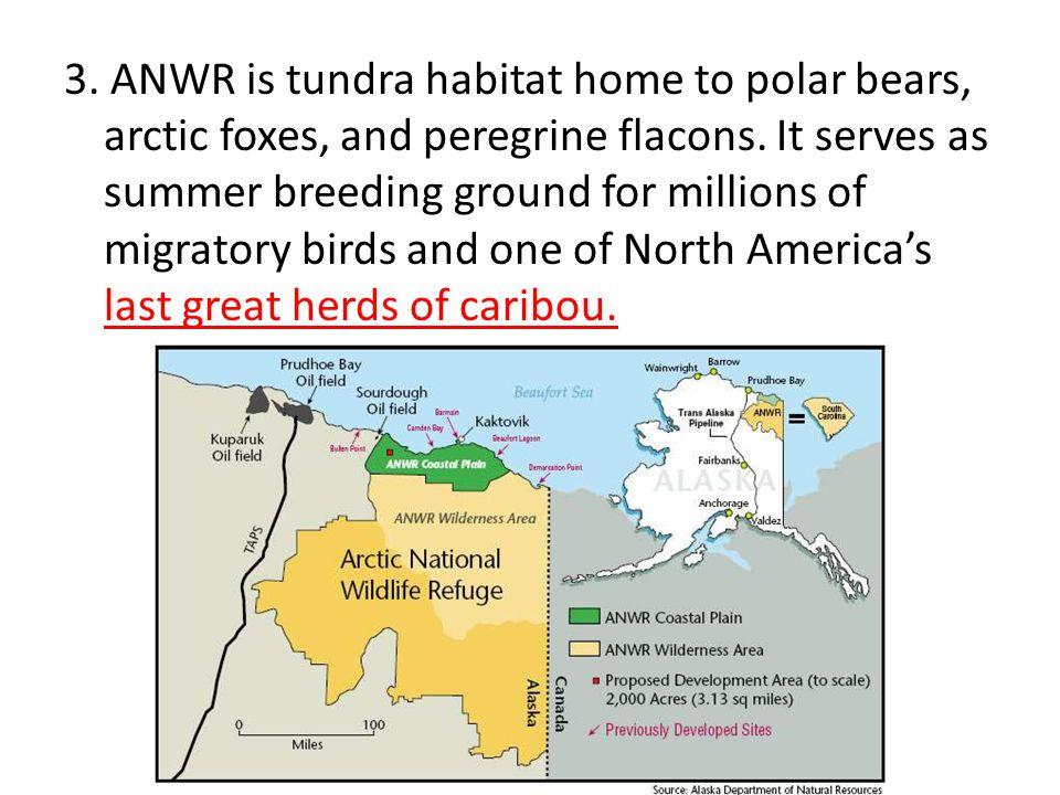3.ANWR is tundra habitat home to polar bears, arctic foxes, and peregrine flacons.