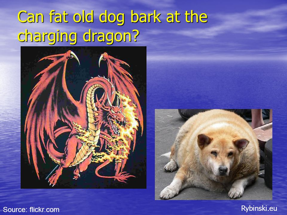 Rybinski.eu Can fat old dog bark at the charging dragon Source: flickr.com