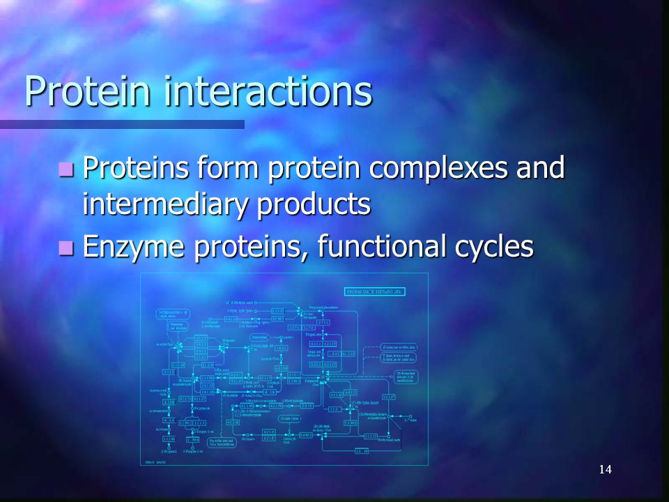14 Protein interactions Proteins form protein complexes and intermediary products Proteins form protein complexes and intermediary products Enzyme pro