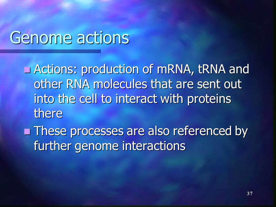 37 Genome actions Actions: production of mRNA, tRNA and other RNA molecules that are sent out into the cell to interact with proteins there Actions: p
