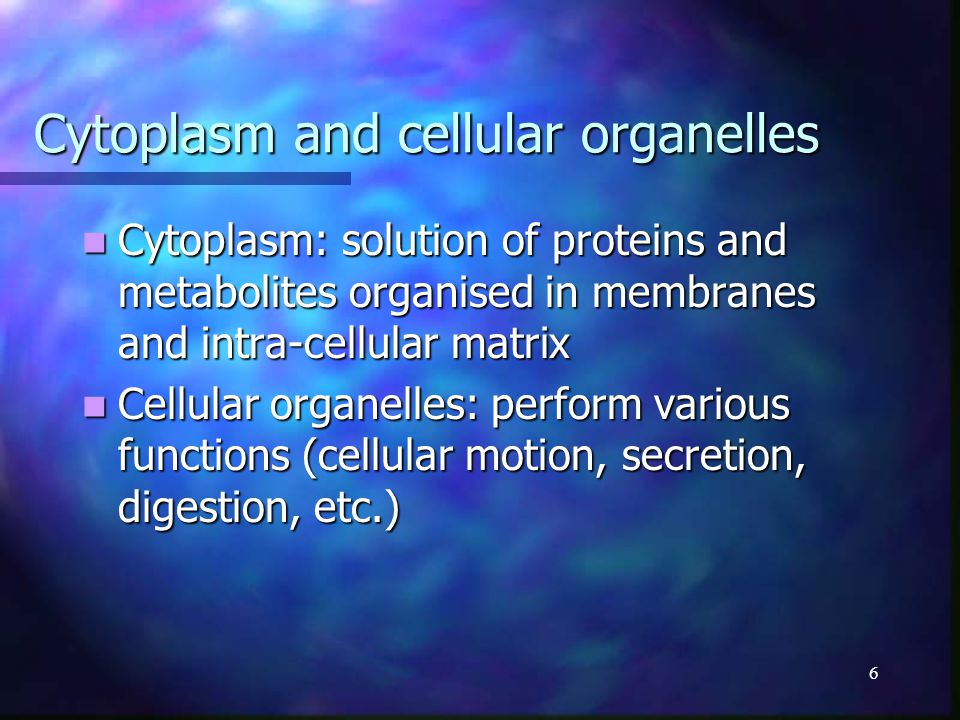 7 The nucleus DNA, chromatin, RNA DNA, chromatin, RNA Contains the code describing cell components Contains the code describing cell components Genes code proteins Genes code proteins Adenin – A, Cytosin – C, Guanin – G, Thymin – T Adenin – A, Cytosin – C, Guanin – G, Thymin – T DNA: organised in genes and non- coding segments DNA: organised in genes and non- coding segments