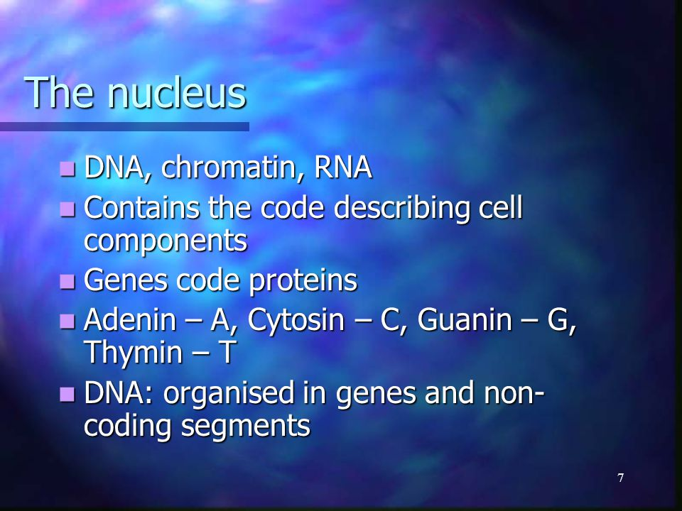 7 The nucleus DNA, chromatin, RNA DNA, chromatin, RNA Contains the code describing cell components Contains the code describing cell components Genes