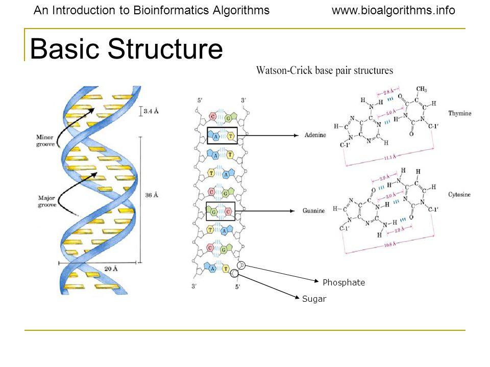 An Introduction to Bioinformatics Algorithmswww.bioalgorithms.info Basic Structure Phosphate Sugar