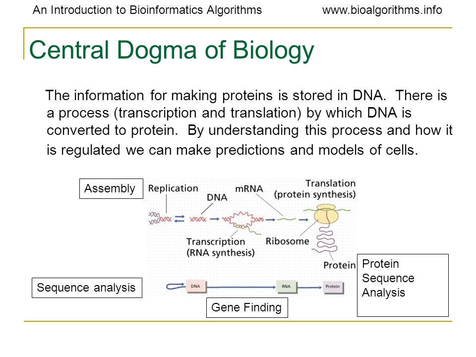 An Introduction to Bioinformatics Algorithmswww.bioalgorithms.info Central Dogma of Biology The information for making proteins is stored in DNA. Ther