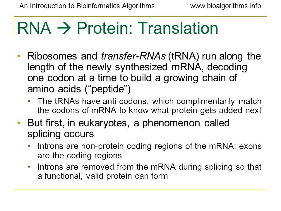 An Introduction to Bioinformatics Algorithmswww.bioalgorithms.info RNA  Protein: Translation Ribosomes and transfer-RNAs (tRNA) run along the length