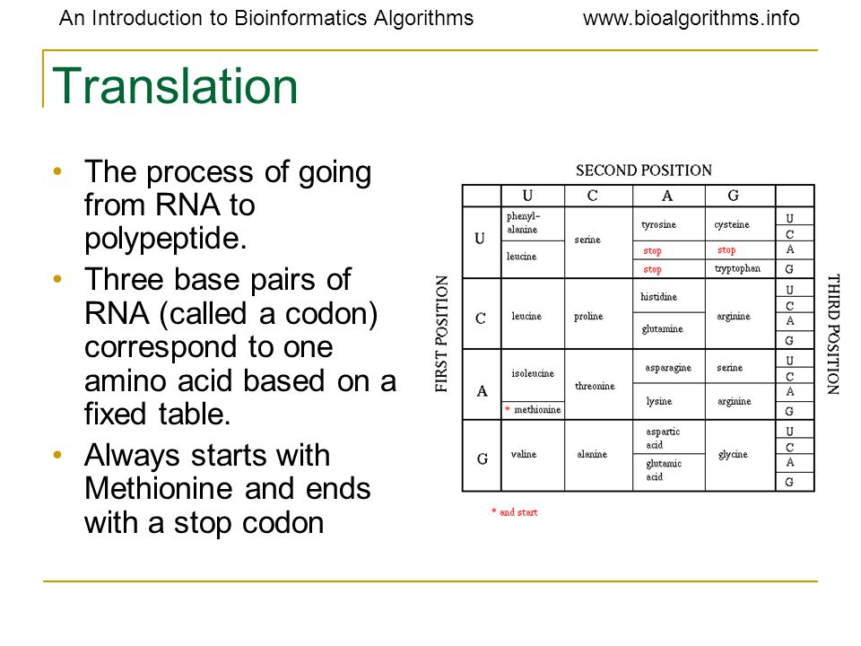 An Introduction to Bioinformatics Algorithmswww.bioalgorithms.info Translation The process of going from RNA to polypeptide. Three base pairs of RNA (