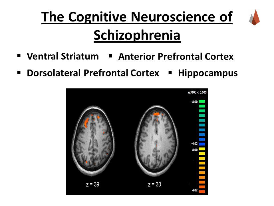 The Cognitive Neuroscience of Schizophrenia  Ventral Striatum  Hippocampus  Dorsolateral Prefrontal Cortex  Anterior Prefrontal Cortex