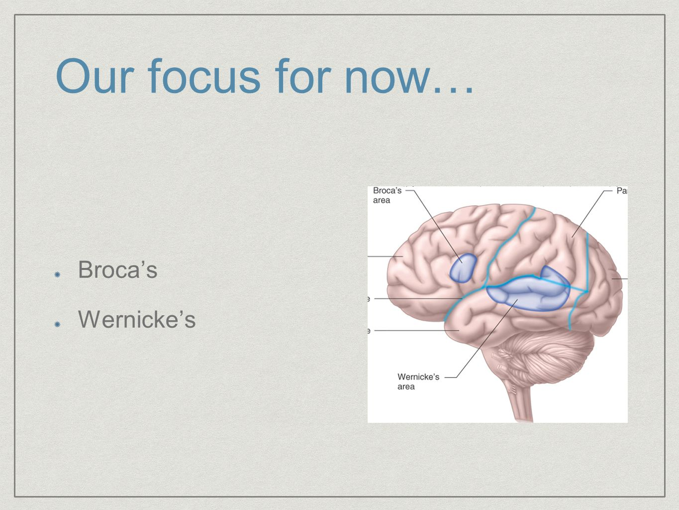 Our focus for now… Broca's Wernicke's