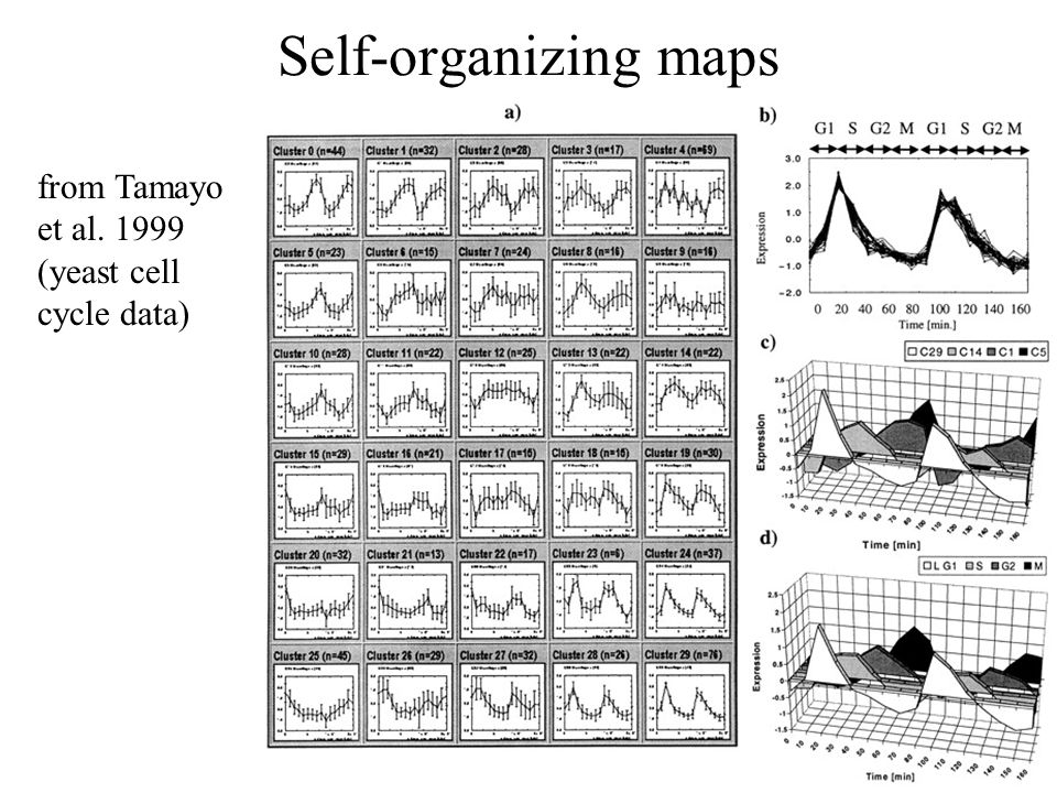 Self-organizing maps from Tamayo et al. 1999 (yeast cell cycle data)