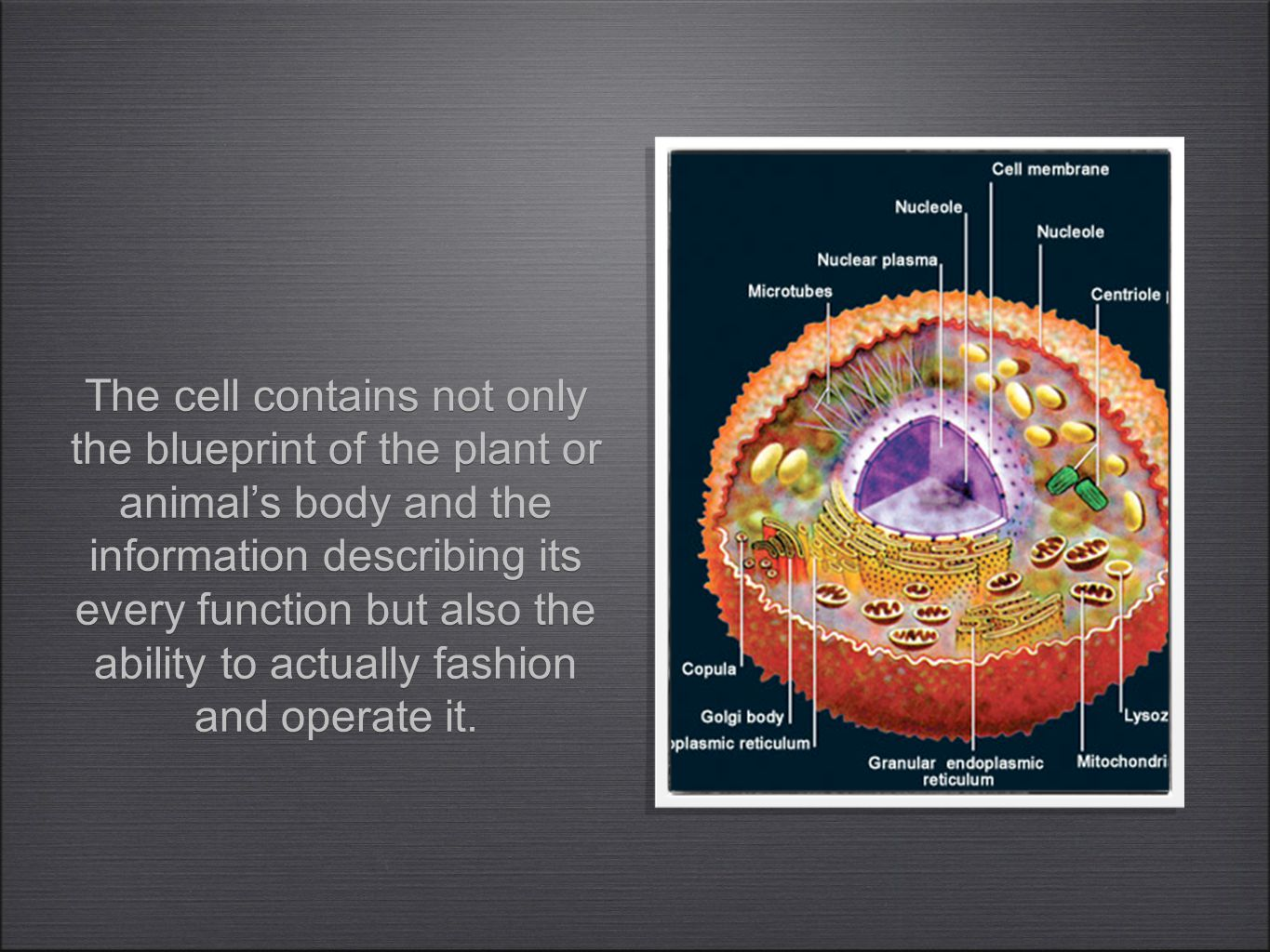 The cell contains not only the blueprint of the plant or animal's body and the information describing its every function but also the ability to actually fashion and operate it.